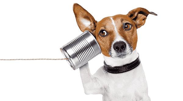 Dog listening to a string-can phone