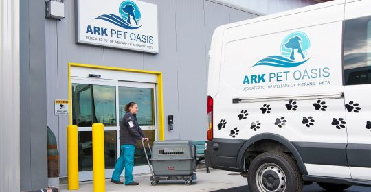 Flying your Pet as Cargo vs. Excess Baggage